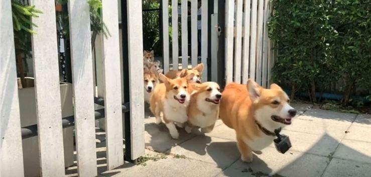 ¿Qué tienen estos 12 perritos que la gente paga por verlos?